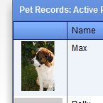 Pet Records Module